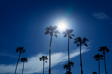 Fototapete - Palm trees in southern California Newport area