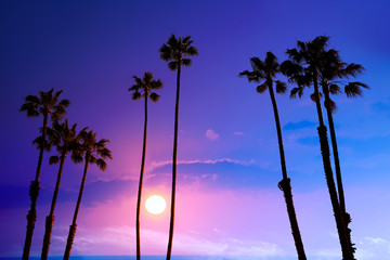 California high palm trees sunset sky silohuette background USA
