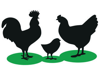 Silhouettes of a rooster, hen and chicken on a white background