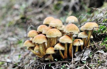 Autumn mashrooms