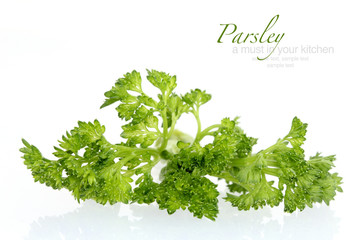 Parsley in macro shoot against white background