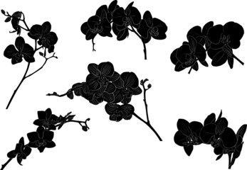 six black orchid branches on white