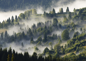Poster Morning with fog forest with clouds and fog