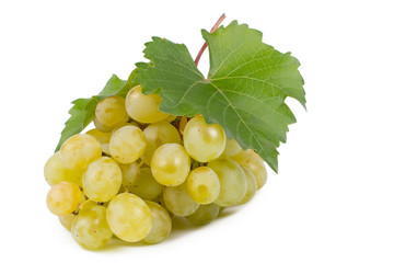 Green grapes fresh from the vine