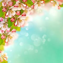 apple blossoms over blurred blue sky background
