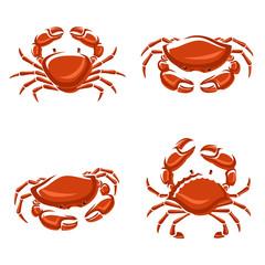 Crab set. Vector
