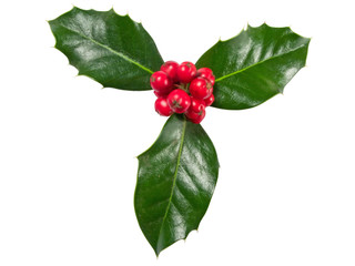 Holly Berry isolated on a white background