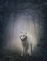 Wall Mural - White wolf