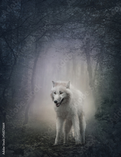 Fototapete White wolf