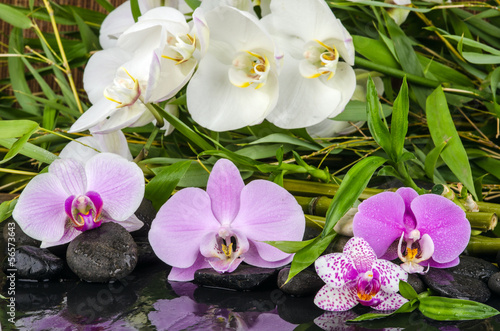 Wellness bilder steine  Wellness, Entspannung: Orchideen, Bambus, Steine und Wasser ...