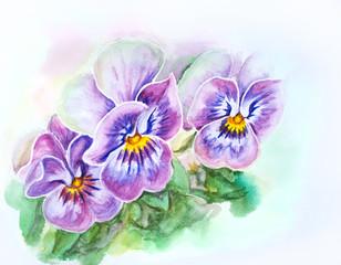 Tender pansies flowers. Watercolor painting.