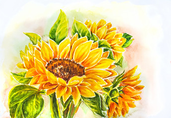 Sunflowers. Watercolor painting.