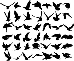 Set of 42 birds and silhouettes of birds