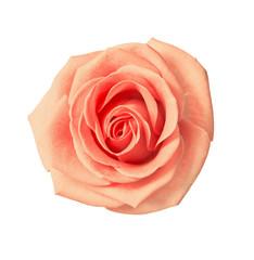 tea rose beige color