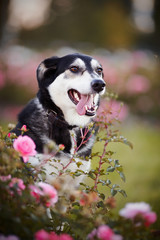 Portrait of a dog in roses.