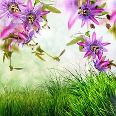Wall Mural - Passionsblumen (passiflora violacea) und Wiese