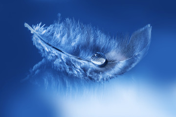 feathers with drop - purity