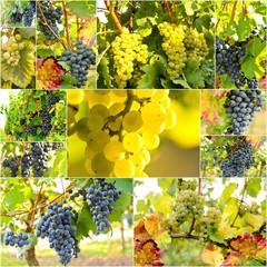 Fototapete - Collage weiße und blaue Trauben