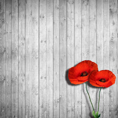 poppies, wooden background black and white