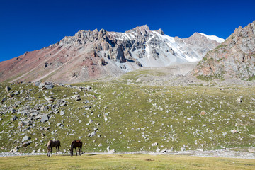Fototapete - Mountain landscape with two horses