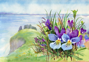 Spring violet flowers on mountain