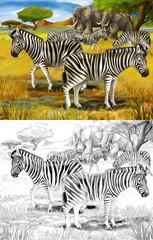 Safari - zebras - coloring page