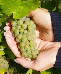 Weißwein - White Wine with female Hands