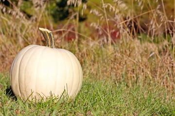 White Pumpkin Outside