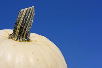 White Pumpkin whit Blue Sky Background