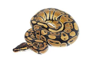 Beautiful Python
