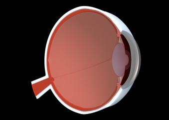 Cross-section of eye