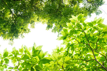 under the Lettuce tree
