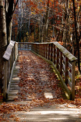 Autumn trail into the woods-1