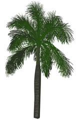 single large green palm tree on white