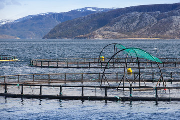 Norwegian fish farm for salmon growing