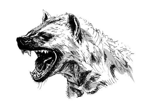 hyena – vector illustration