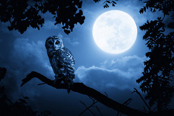 Fotoväggar - Owl Illuminated By Full Moon On Halloween Night
