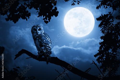 Fototapete Owl Illuminated By Full Moon On Halloween Night