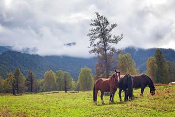 horses in mountain landscape