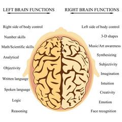 Brain Hemisphere Functions