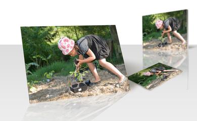 Tirage photo - enfant plantant un pied de tomate