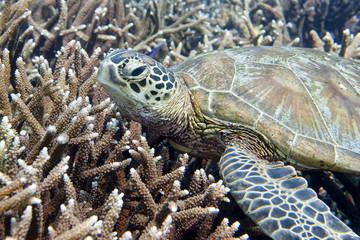 A sea Turtle portrait