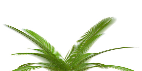 palm branch on a white background
