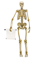 human skeleton holding scroll isolated on white