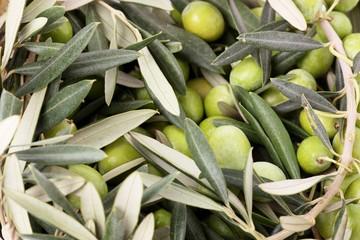 Fototapete - Mucchio di olive e foglie verdi
