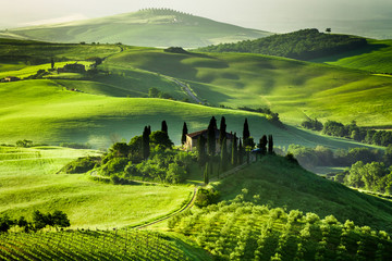 Poster de jardin Vignoble Farm of olive groves and vineyards