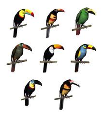 Toucan Varieties