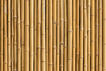 Poster Bamboo bamboo fence background