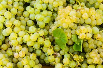 Niagara grapes on display at market