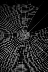Spider web pattern for halloween scary spiderweb